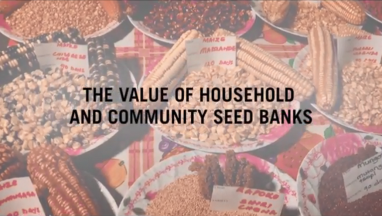 Video: Value of Household and Community Seed Banks